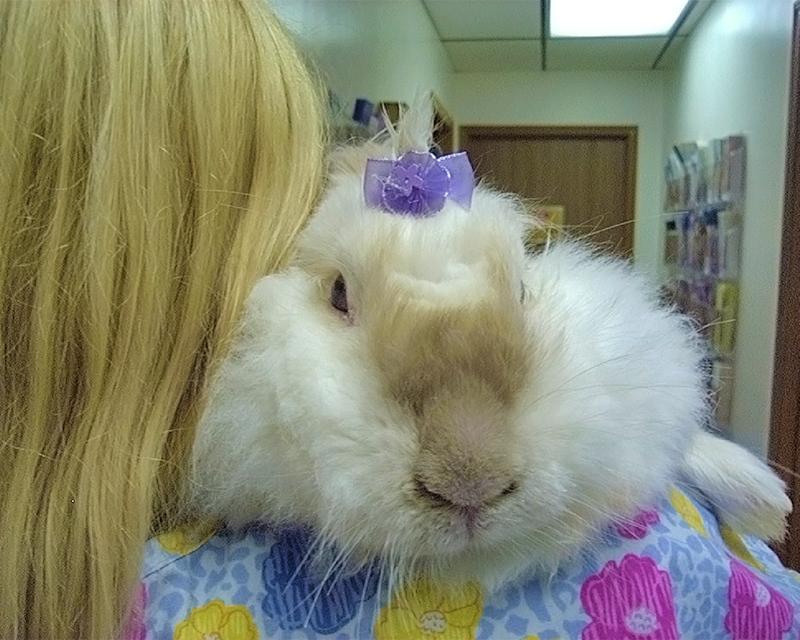 Hope Animal Hospital - St  Louis - Fenton